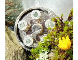 aquadea venusblume